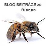 Gabriele Steinig Biene Buckfast