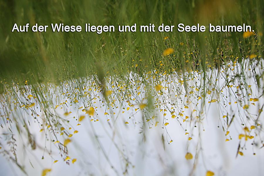 Auf der Wiese mit der Seele baumeln   Gabriele Steinig