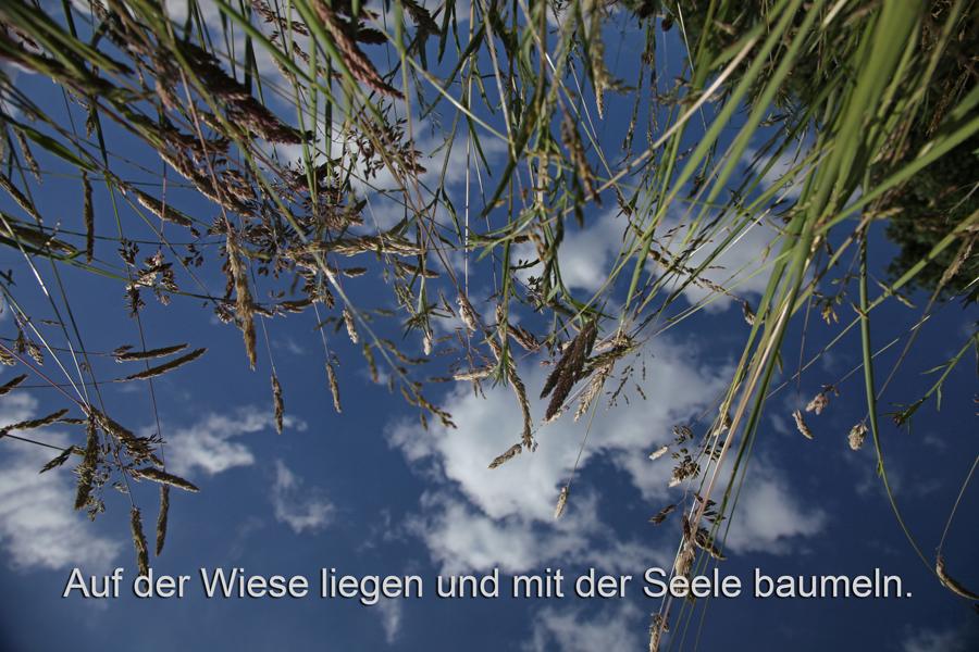 In der Wiese mit der Seele baumeln   Gabriele Steinig
