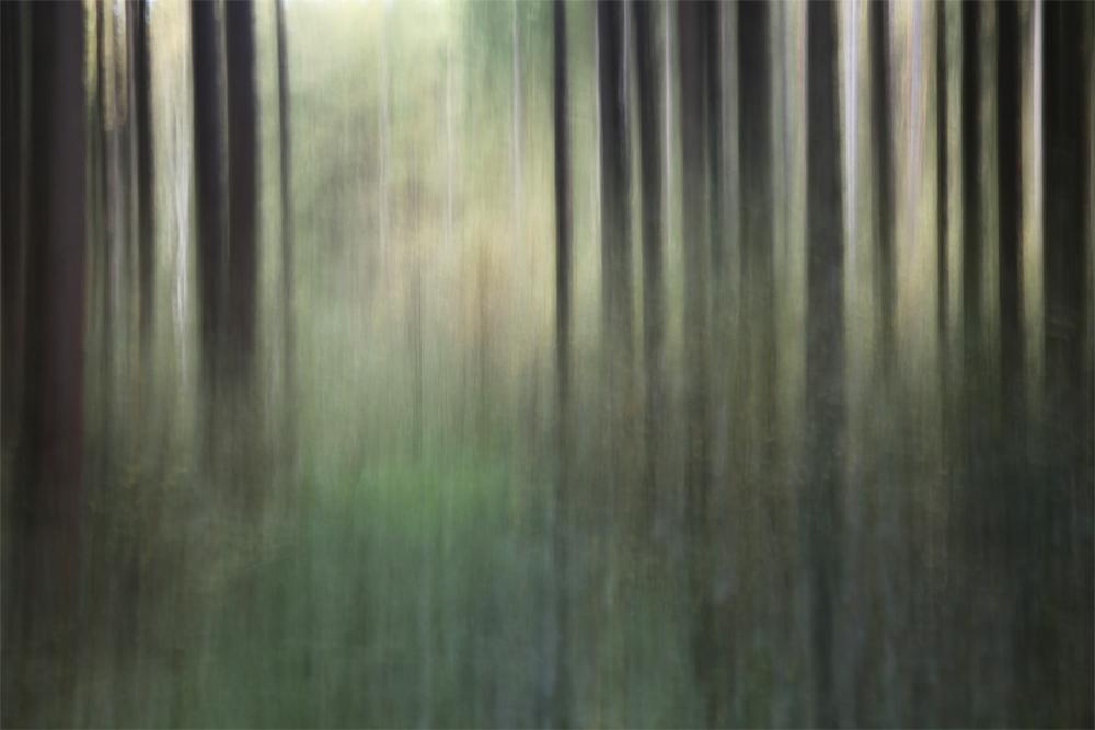 Gabriele Steinig|Wald