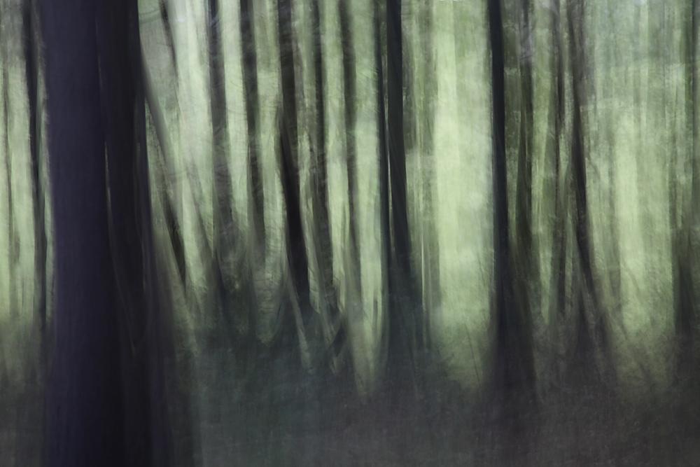 Gabriele Steinig| Waldrand