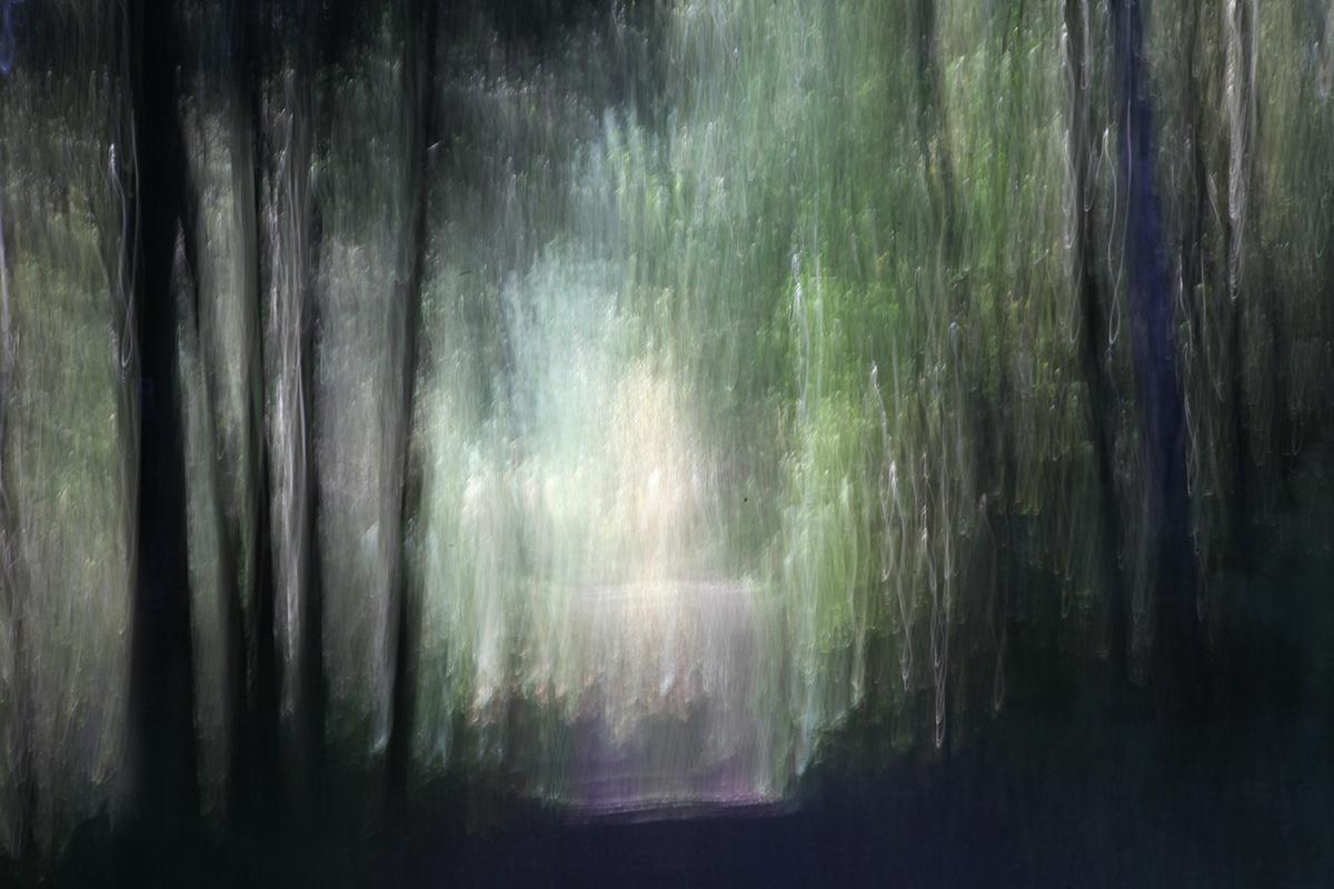 Glückslicht heute im Wald