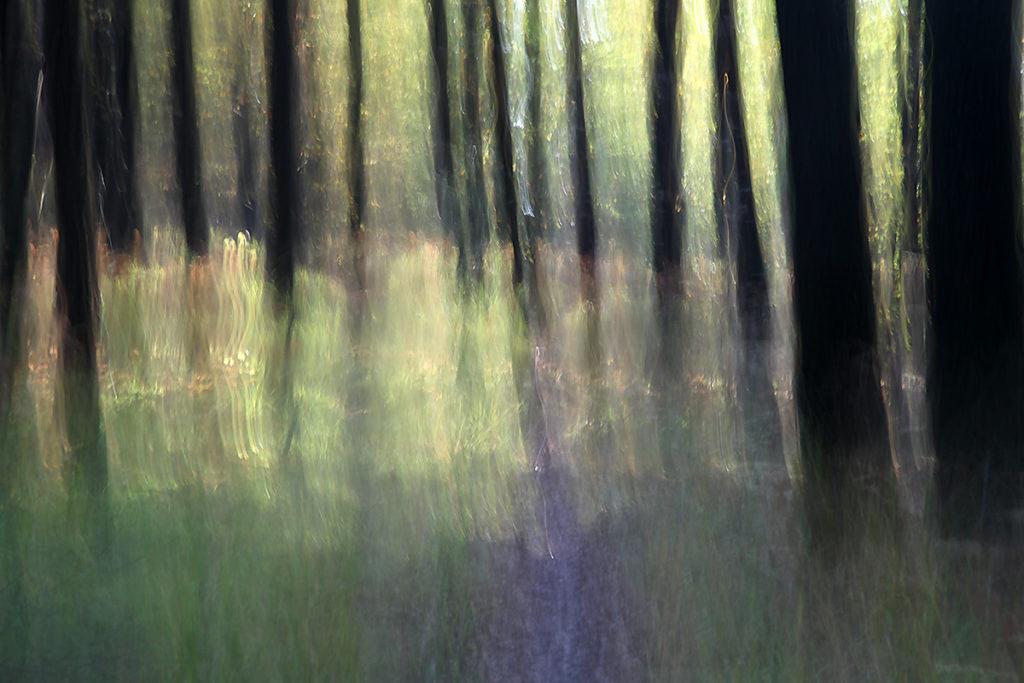 Gabriele Steinig | Wald-Dusche